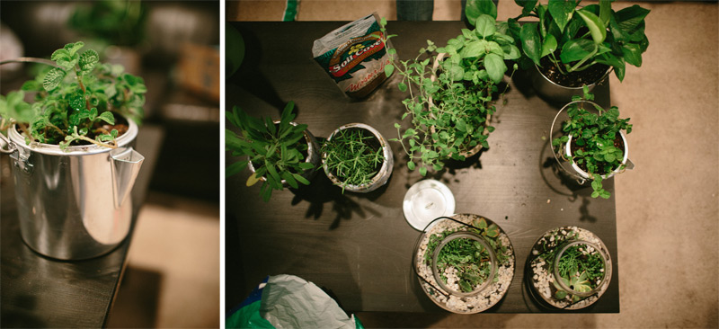 Terrarium Planting Ideas for home
